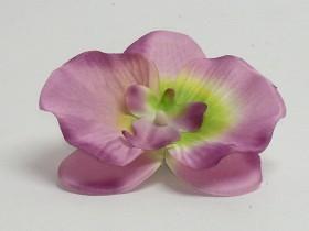 Orchidea hl.