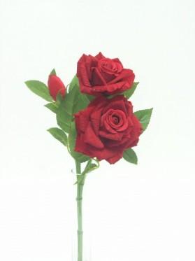 Ruža x 2+1 ks