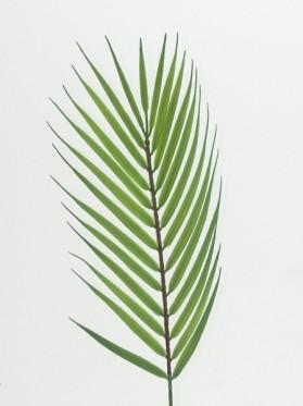 List palmy malý