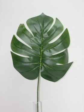 List monstera