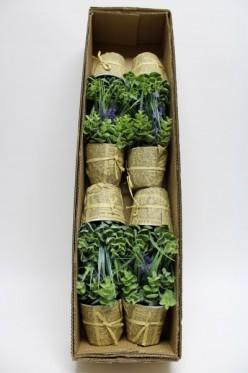 Levanduľa + eukaliptus v črepníku